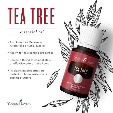 Tea Tree Oil | Essential Oil Obsessed