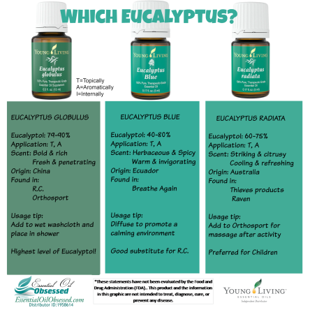 eucalyptus which2