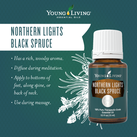 northern Lights black spruce yl