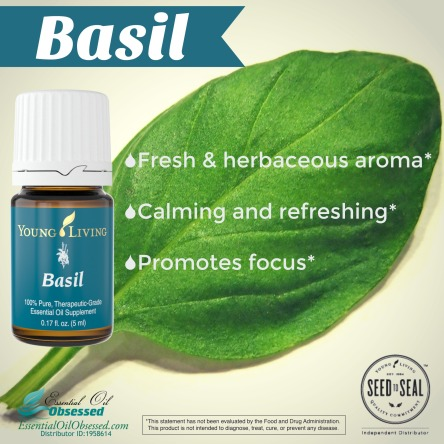 how to make basil oil for skin