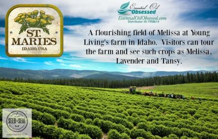 melissa-farm