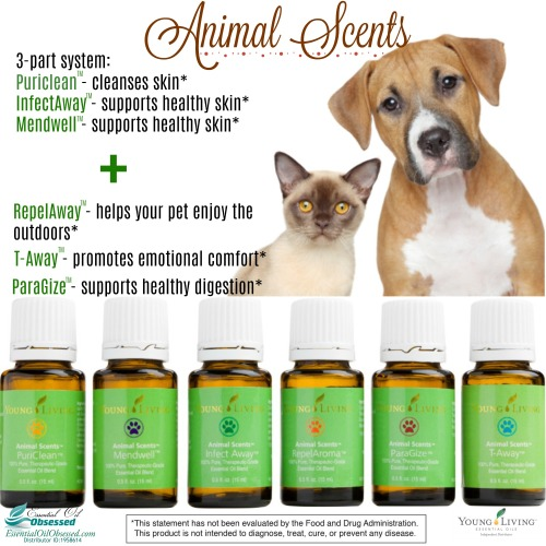 Dental Pet Chews Essential Oil Obsessed