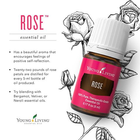 Rose Essential Oil Essential Oil Obsessed