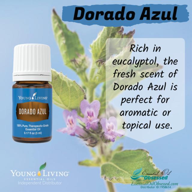 Dorado Azul™ Essential oil | Essential Oil Obsessed